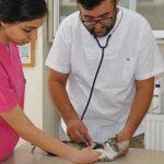 veteriner muayene