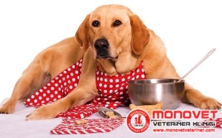 köpeklere zararlı yiyecekler