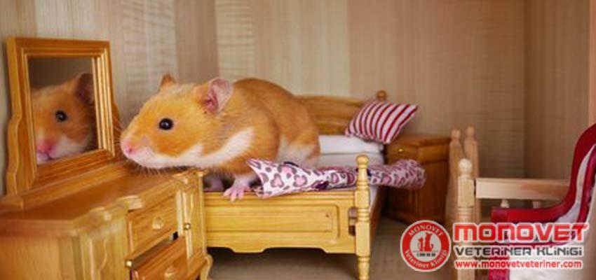 hamsterların yaşam alanı