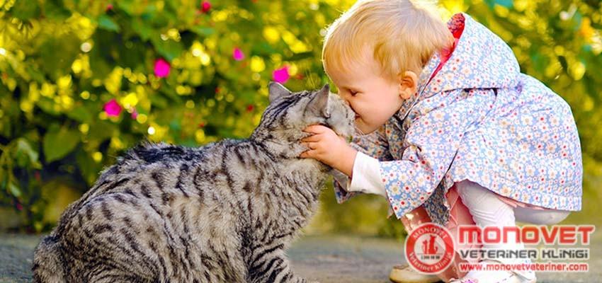 Kedileri Sevmek & Anlamak